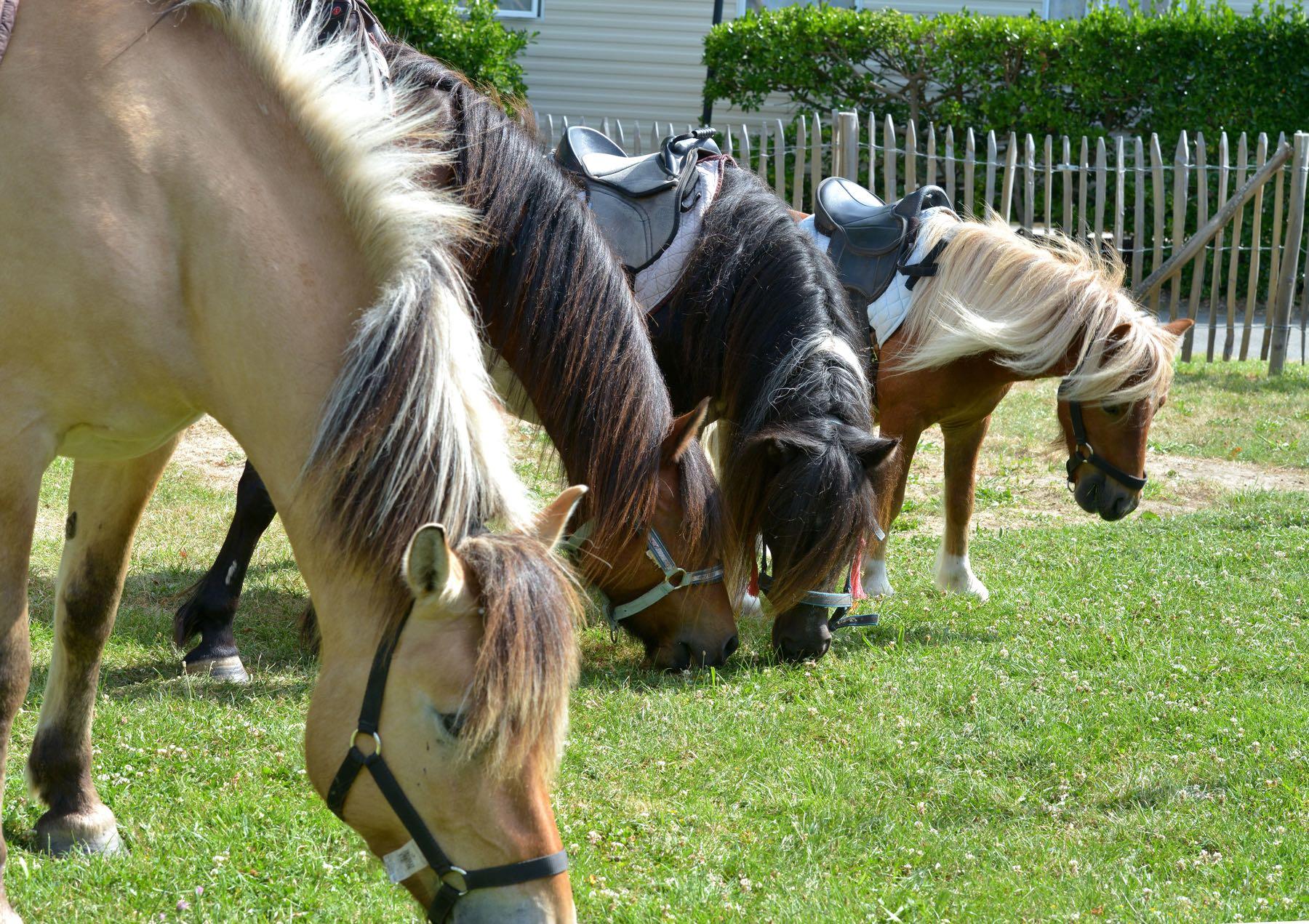 camping-vendee-saint-jean-de-monts-chevaux-Le-Tropicana